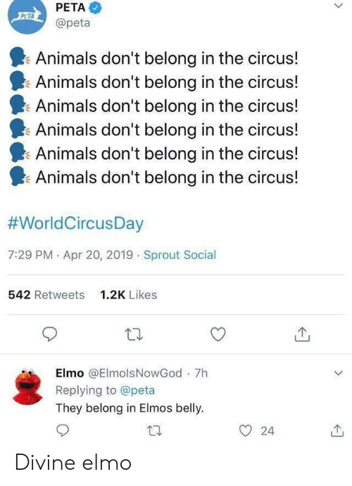 Animals, Elmo, and Peta: PETA  @peta  Animals don't belong in the circus!  Animals don't belong in the circus!  Animals don't belong in the circus!  Animals don't belong in the circus!  Animals don't belong in the circus!  I. Animals don't belong in the circus!  #WorldCircusDay  7:29 PM . Apr 20, 2019 Sprout Social  542 Retweets  1.2K Likes  Elmo @ElmolsNowGod 7h  Replying to @peta  They belong in Elmos belly.  O 24 Divine elmo