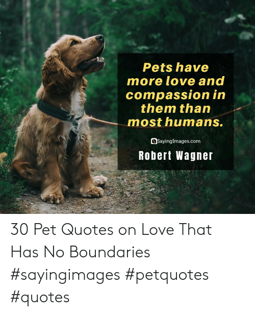 Love, Pets, and Quotes: Pets have  more love and  compassion in  them than  most humans.  SayingImages.com  Robert Wagner 30 Pet Quotes on Love That Has No Boundaries #sayingimages #petquotes #quotes