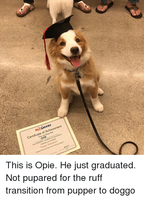 opie: PETSMART  Certificate of Achievement  This c  s that  OPIE  has  Puppy Education This is Opie. He just graduated. Not pupared for the ruff transition from pupper to doggo