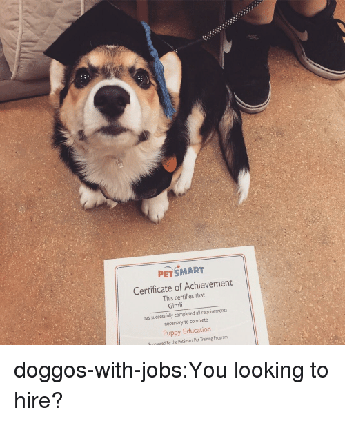Tumblr, Blog, and Jobs: PETSMART  Certificate of Achievement  This certifies tha  Gimli  has successfully completed all requirements  necessary to complete  Puppy Education  Snonsered By the PetSmart Pet Training Program doggos-with-jobs:You looking to hire?
