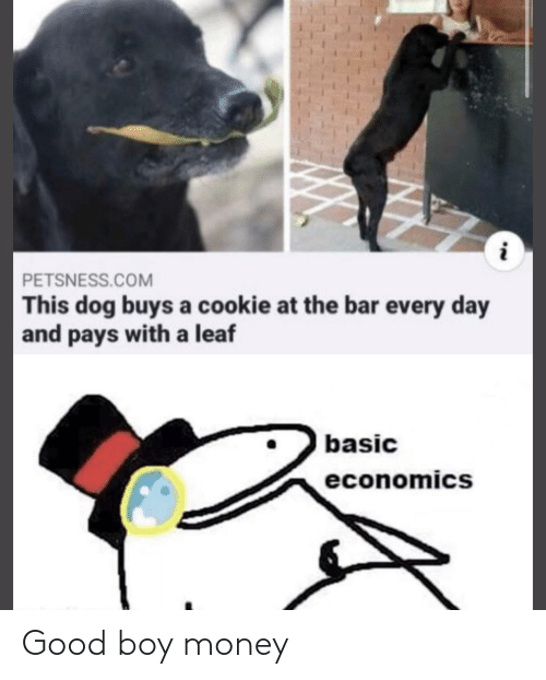 every day: PETSNESS.COM  This dog buys a cookie at the bar every day  and pays with a leaf  basic  economics  NN Good boy money