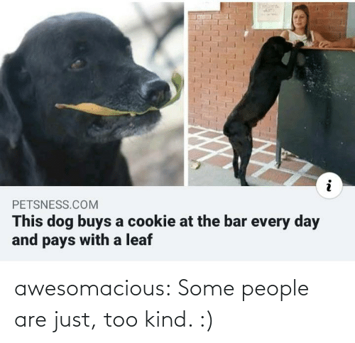 every day: PETSNESS.COM  This dog buys a cookie at the bar every day  and pays with a leaf awesomacious:  Some people are just, too kind. :)
