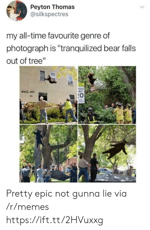 "Peyton: Peyton Thomas  @silkspectres  my all-time favourite genre of  photograph is ""tranquilized bear falls  out of tree""  100  ewill ent  EED  MIT  :0 Pretty epic not gunna lie via /r/memes https://ift.tt/2HVuxxg"