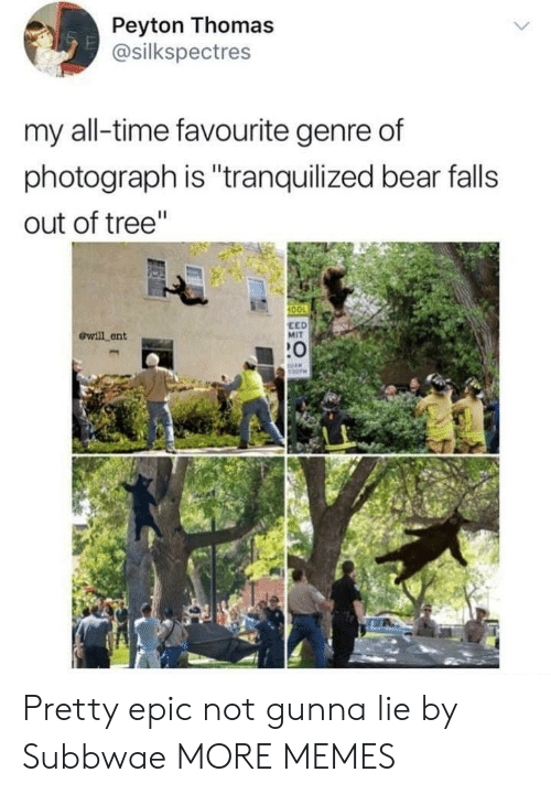 "Peyton: Peyton Thomas  @silkspectres  my all-time favourite genre of  photograph is ""tranquilized bear falls  out of tree""  100  ewill ent  EED  MIT  :0 Pretty epic not gunna lie by Subbwae MORE MEMES"