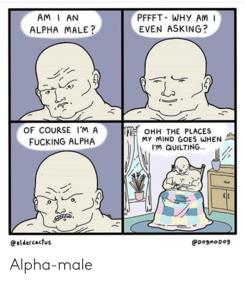male: PFFFT WHY AM  EVEN ASKING?  AM I AN  ALPHA MALE?  OF COURSE I'M A  OHH THE PLACES  My MIND GOES WHEN  M QUILTING...  FUCKING ALPHA  eeldercactus  @DogmoDog Alpha-male
