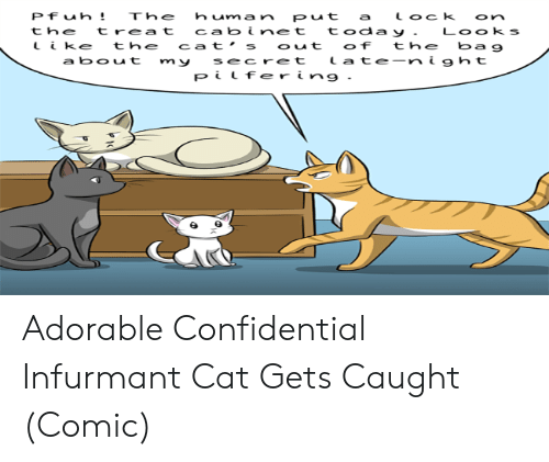 Cats, Today, and Adorable: Pfuh!  human put  The  tock  a  on  today .  the  treat  cabinet  Looks  ke  cat's out  of  the  the  bag  late-night  a bout  secret  m y  Pilfer ing. Adorable Confidential Infurmant Cat Gets Caught (Comic)