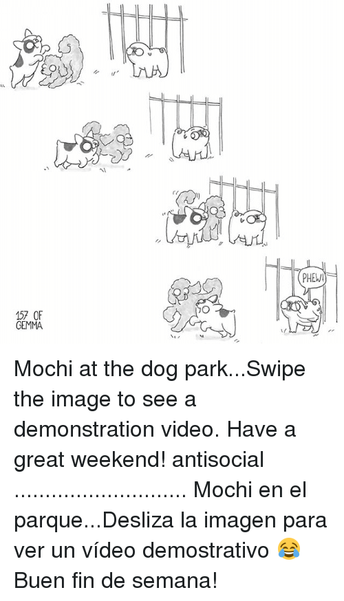 Imagenable: PHEW  157 OF  GEMMA Mochi at the dog park...Swipe the image to see a demonstration video. Have a great weekend! antisocial ............................ Mochi en el parque...Desliza la imagen para ver un vídeo demostrativo 😂 Buen fin de semana!
