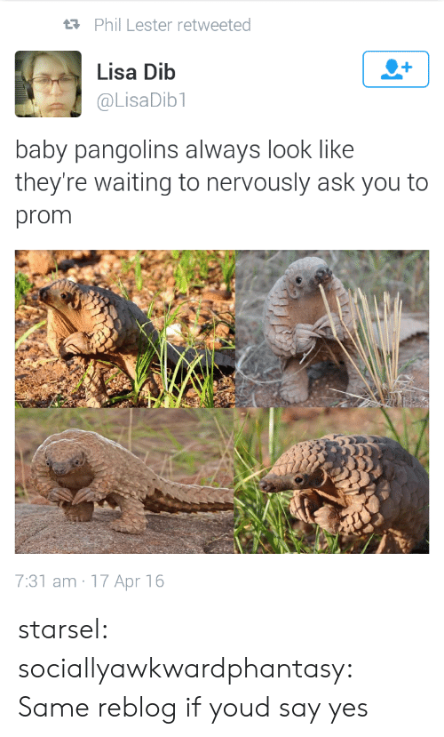Tumblr, Blog, and Http: Phil Lester retweeted  Lisa Dib  @LisaDib1  baby pangolins always look like  they're waiting to nervously ask you to  prom  7:31 am 17 Apr 16 starsel:  sociallyawkwardphantasy:  Same  reblog if youd say yes