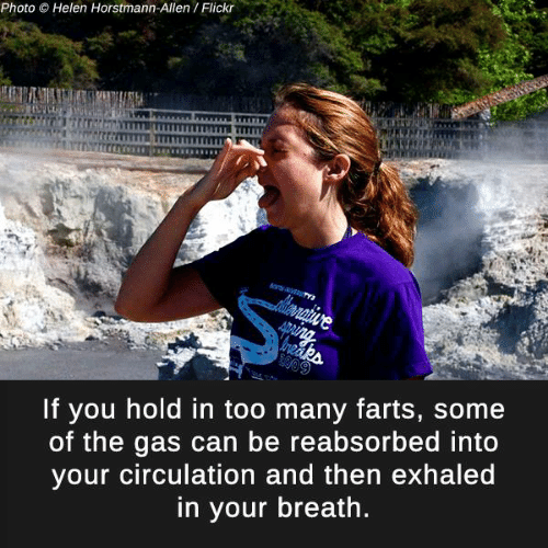 Hold In: Photo  O Helen Horstmann-Allen Flickr  If you hold in too many farts, some  of the gas can be reabsorbed into  your circulation and then exhaled  in your breath.