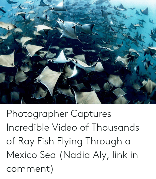 Flying Through: Photographer Captures Incredible Video of Thousands of Ray Fish Flying Through a Mexico Sea (Nadia Aly, link in comment)