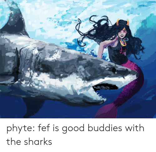 Target, Tumblr, and Blog: phyte: fef is good buddies with the sharks