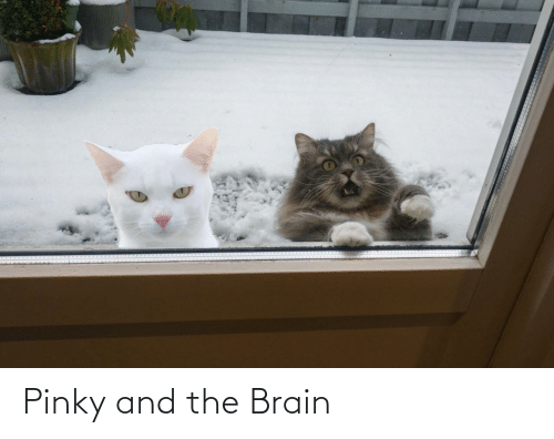 Pinky: Pinky and the Brain