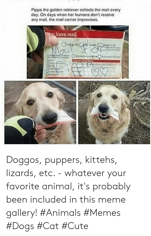 Animals Memes: Pippa the golden retriever collects the mail every  day. On days when her humans don't receive  any mail, the mail carrier improvises.  have mai Doggos, puppers, kittehs, lizards, etc. - whatever your favorite animal, it's probably been included in this meme gallery! #Animals #Memes #Dogs #Cat #Cute
