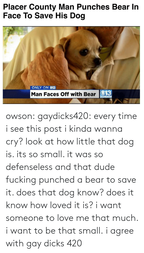 i agree: Placer County Man Punches Bear In  Face To Save His Dog   ONLY ON O13  Man Faces Off with Bear O13 owson: gaydicks420:  every time i see this post i kinda wanna cry? look at how little that dog is. its so small. it was so defenseless and that dude fucking punched a bear to save it. does that dog know? does it know how loved it is? i want someone to love me that much. i want to be that small.  i agree with gay dicks 420