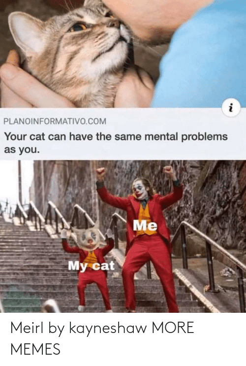 problems: PLANOINFORMATIVO.COM  Your cat can have the same mental problems  as you.  Me  My cat Meirl by kayneshaw MORE MEMES