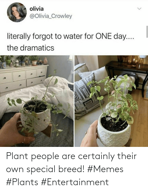 their: Plant people are certainly their own special breed! #Memes #Plants #Entertainment