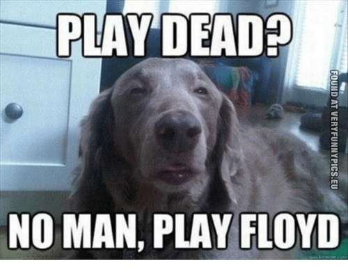 Memes, 🤖, and Play: PLAY  DEAD?  NO MAN, PLAY FLOYD