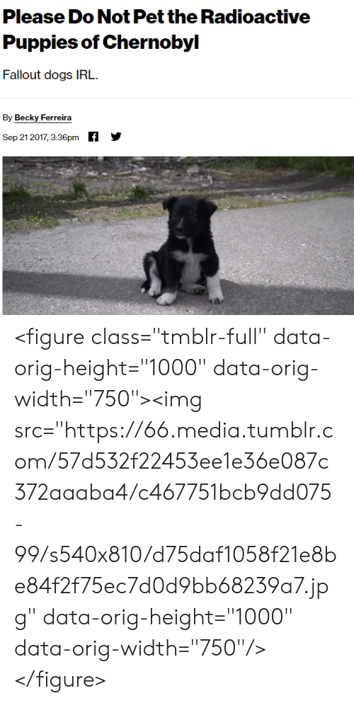 """Dogs, Puppies, and Tumblr: Please Do Not Pet the Radioactive  Puppies of Chernobyl  Fallout dogs IRL  By Becky Ferreira  f  Sep 21 2017, 3:36pm <figure class=""""tmblr-full"""" data-orig-height=""""1000"""" data-orig-width=""""750""""><img src=""""https://66.media.tumblr.com/57d532f22453ee1e36e087c372aaaba4/c467751bcb9dd075-99/s540x810/d75daf1058f21e8be84f2f75ec7d0d9bb68239a7.jpg"""" data-orig-height=""""1000"""" data-orig-width=""""750""""/></figure>"""