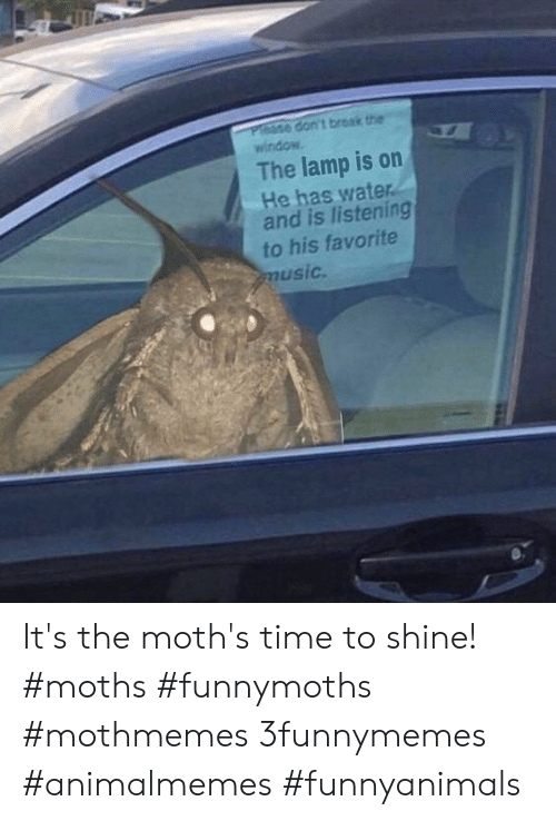 Music, Break, and Time: Please don't break the  window  The lamp is on  He has water.  and is listening  to his favorite  music. It's the moth's time to shine!  #moths #funnymoths #mothmemes 3funnymemes #animalmemes #funnyanimals