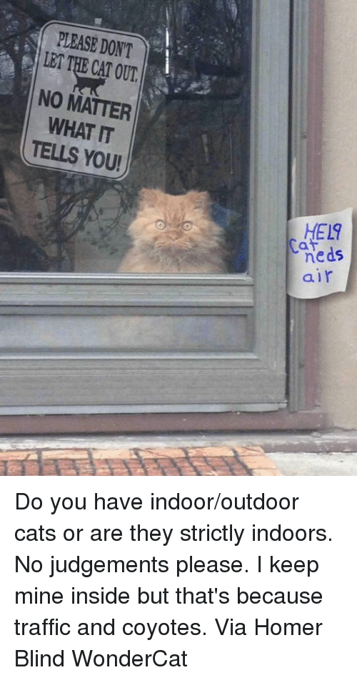 Cats, Memes, and Traffic: PLEASE DONT  LET THE CAT OUT  NO MATTER  WHAT IT  TELLS YOU!  HEL9  neds  air  5 Do you have indoor/outdoor cats or are they strictly indoors. No judgements please. I keep mine inside but that's because traffic and coyotes. Via Homer Blind WonderCat