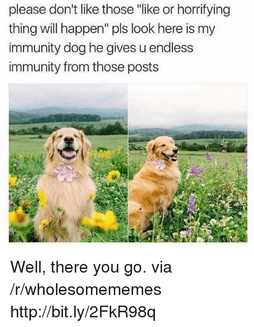 "Http, Dog, and Via: please don't like thoe ""like or horrifying  thing will happen"" pls look here is my  immunity dog he gives u endless  immunity from those posts Well, there you go. via /r/wholesomememes http://bit.ly/2FkR98q"