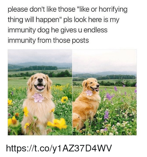 "Happenes: please don't like those ""like or horrifying  thing will happen"" pls look here is my  immunity dog he gives u endless  immunity from those posts https://t.co/y1AZ37D4WV"