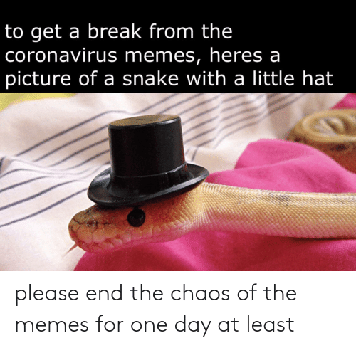chaos: please end the chaos of the memes for one day at least