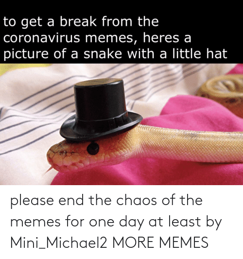 chaos: please end the chaos of the memes for one day at least by Mini_Michael2 MORE MEMES