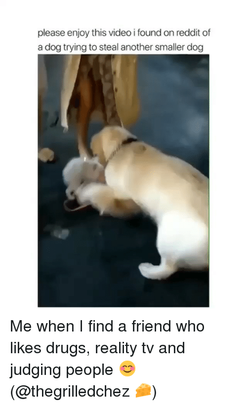 reality tv: please enjoy this video i found on reddit of  a dog trying to steal another smaller dog Me when I find a friend who likes drugs, reality tv and judging people 😊 (@thegrilledchez 🧀)