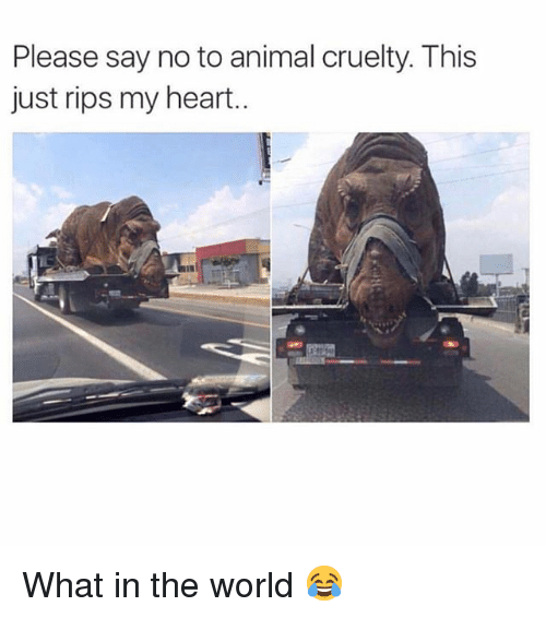 Memes, Animal, and Heart: Please say no to animal cruelty. This  just rips my heart. What in the world 😂