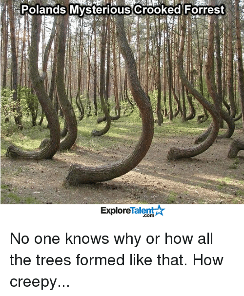 talent explore: Polands Mysterious crooked Forrest  Talent  Explore No one knows why or how all the trees formed like that. How creepy...