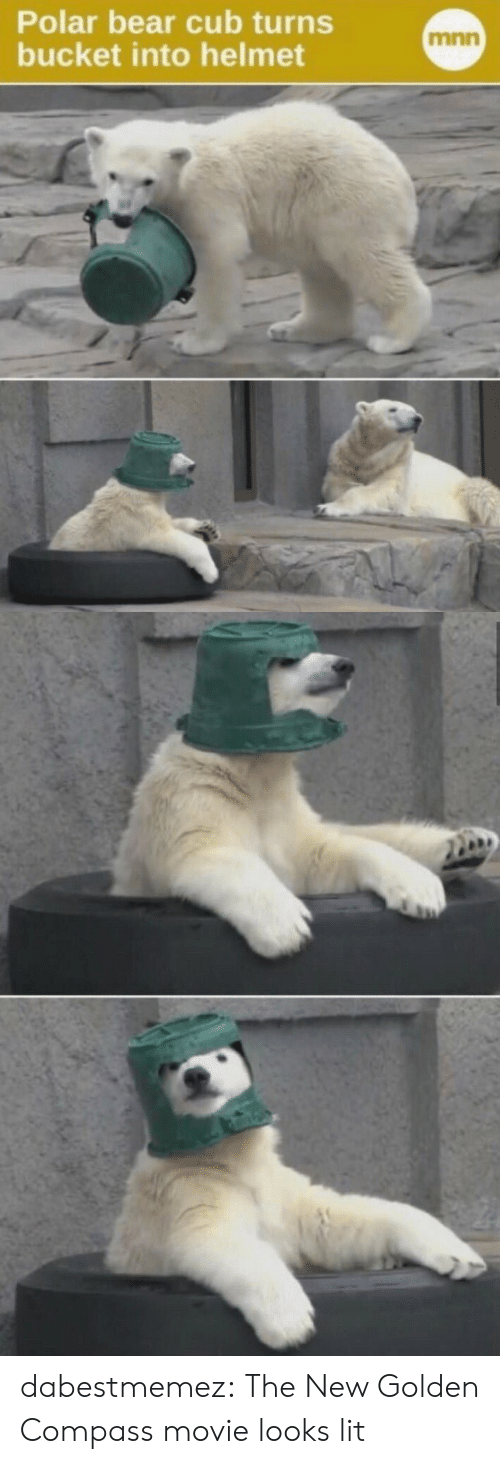 Bucket: Polar bear cub turns  bucket into helmet  mnn dabestmemez: The New Golden Compass movie looks lit