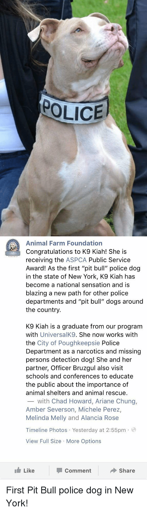 "Missing Person: POLICE   Animal Farm Foundation  Congratulations to K9 Kiah! She is  receiving the  ASPCA Public Service  Award! As the first ""pit bull"" police dog  in the state of New York, K9 Kiah has  become a national sensation and is  blazing a new path for other police  departments and ""pit bull"" dogs around  the country  K9 Kiah is a graduate from our program  with  UniversalK9. She now works with  the City of Poughkeepsie Police  Department as a narcotics and missing  persons detection dog! She and her  partner, Officer Bruzgul also visit  schools and conferences to educate  the public about the importance of  animal shelters and animal rescue.  with Chad Howard, Ariane Chung,  Amber Severson, Michele Perez,  Melinda Melly and Alancia Rose  Timeline Photos Yesterday at 2:55pm  a  View Full Size More Options  Like  Share  Comment First Pit Bull police dog in New York!"