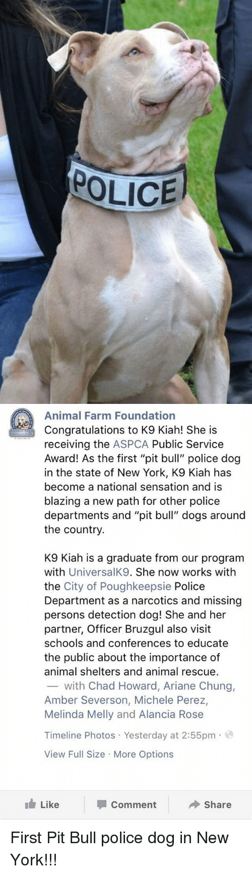 "Missing Person: POLICE   Animal Farm Foundation  Congratulations to K9 Kiah! She is  receiving the ASPCA Public Service  Award! As the first ""pit bull"" police dog  in the state of New York, K9 Kiah has  become a national sensation and is  blazing a new path for other police  departments and ""pit bull"" dogs around  the country.  K9 lah is a graduate from our program  with  UniversalK9. She now works with  the City of Poughkeepsie Police  Department as a narcotics and missing  persons detection dog! She and her  partner, Officer Bruzgul also visit  schools and conferences to educate  the public about the importance of  animal shelters and animal rescue.  with Chad Howard, Ariane Chung,  Amber Severson, Michele Perez,  Melinda Melly and Alancia Rose  Timeline Photos Yesterday at 2:55pm  o  View Full Size More Options  Like  Share  Comment First Pit Bull police dog in New York!!!"