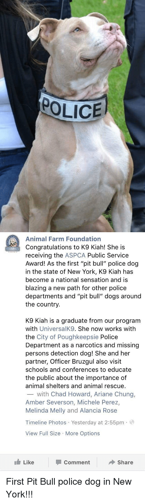 "Missing Person: POLICE   Animal Farm Foundation  Congratulations to K9 Kiah! She is  receiving the  ASPCA Public Service  Award! As the first ""pit bull"" police dog  in the state of New York, K9 Kiah has  become a national sensation and is  blazing a new path for other police  departments and ""pit bull"" dogs around  the country  K9 Kiah is a graduate from our program  with  UniversalK9. She now works with  the City of Poughkeepsie Police  Department as a narcotics and missing  persons detection dog! She and her  partner, Officer Bruzgul also visit  schools and conferences to educate  the public about the importance of  animal shelters and animal rescue.  with Chad Howard, Ariane Chung,  Amber Severson, Michele Perez,  Melinda Melly and Alancia Rose  Timeline Photos Yesterday at 2:55pm.  View Full Size More Options  Like  Share  Comment First Pit Bull police dog in New York!!!"