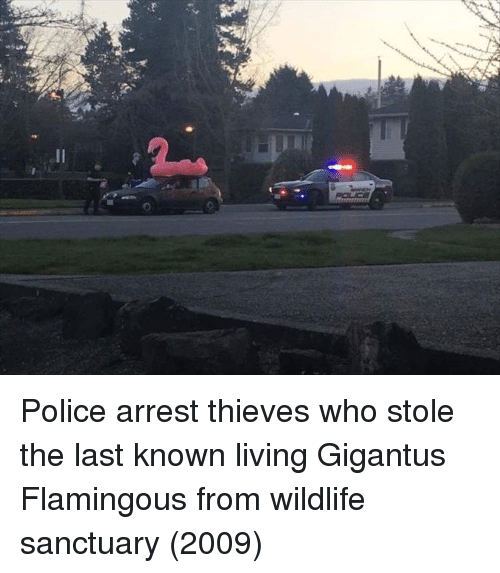 Police, Living, and Sanctuary: Police arrest thieves who stole the last known living Gigantus Flamingous from wildlife sanctuary (2009)