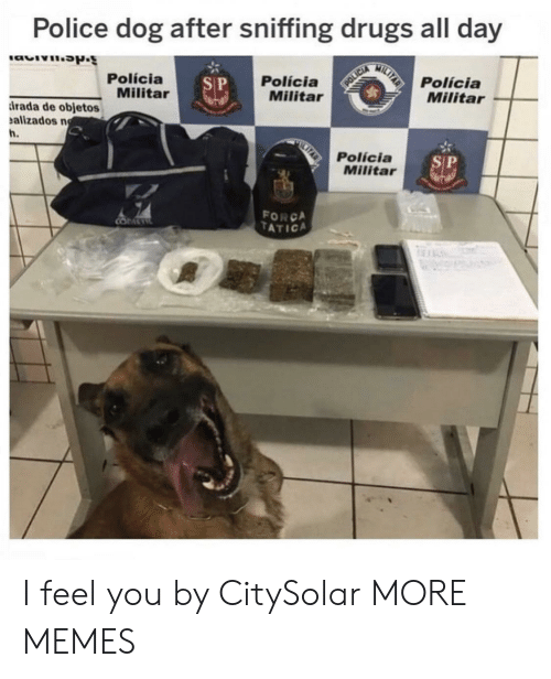 police dog: Police dog after sniffing drugs all day  MILTAR  Polícia  Militar  Polícia  Militar  Polícia  Militar  S P  POLICIA  rada de objetos  alizados n  h.  Polícia  Militar  SP  FORCA  TATICA  COMETE  An I feel you by CitySolar MORE MEMES