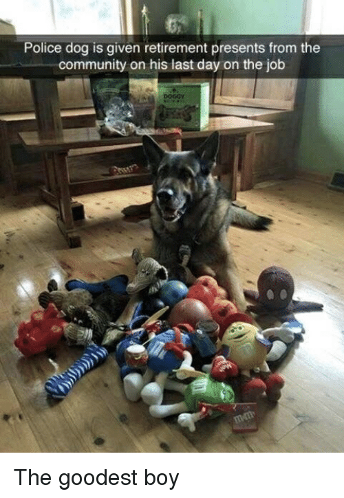police dog: Police dog is given retirement presents from the  community on his last day on the job The goodest boy