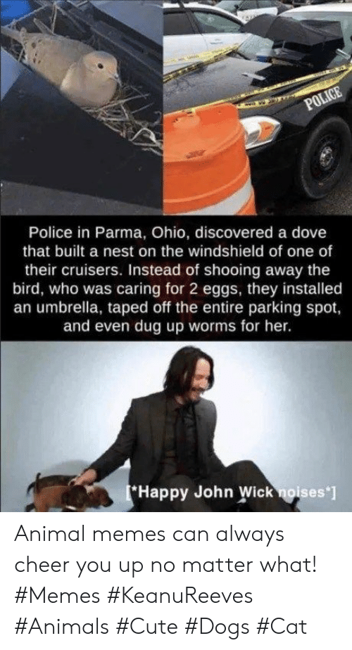 Animal Memes: POLICE  Police in Parma, Ohio, discovered a dove  that built a nest on the windshield of one of  their cruisers. Instead of shooing away the  bird, who was caring for 2 eggs, they installed  an umbrella, taped off the entire parking spot,  and even dug up worms for her.  Happy John Wick noises ] Animal memes can always cheer you up no matter what! #Memes #KeanuReeves #Animals #Cute #Dogs #Cat