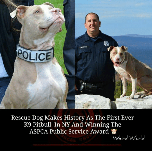 Aspca: POLICE  Rescue Dog Makes History As The First Ever  K9 Pitbull In NY And Winning The  ASPCA Public Service Award  Weird World
