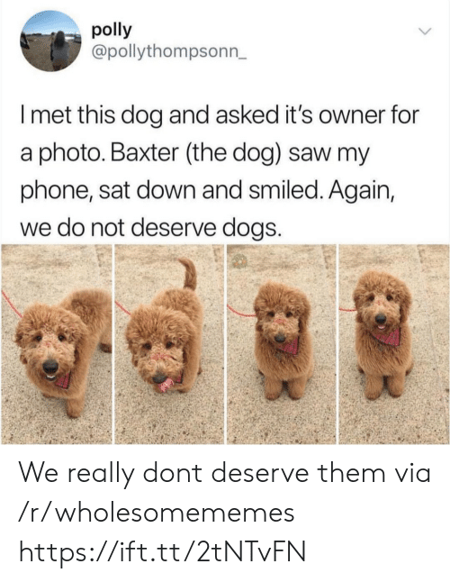 Dogs, Phone, and Saw: polly  @pollythompsonn,  I met this dog and asked it's owner for  a photo. Baxter (the dog) saw my  phone, sat down and smiled. Again,  we do not deserve dogS We really dont deserve them via /r/wholesomememes https://ift.tt/2tNTvFN