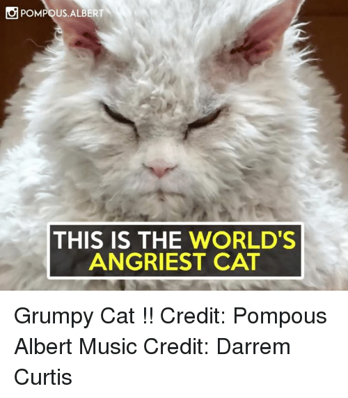Grumpy Cats: POMPOUS ALBERT  THIS IS THE WORLD'S  ANGRIEST CAT Grumpy Cat !!  Credit: Pompous Albert Music Credit: Darrem Curtis