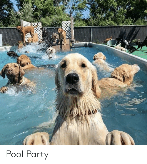 pool-party: Pool Party