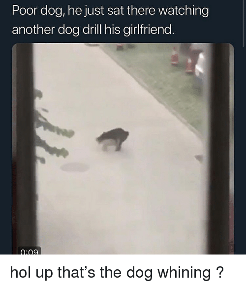 Hol Up: Poor dog, he just sat there watching  another dog drill his girlfriend  0:09 hol up that's the dog whining ?
