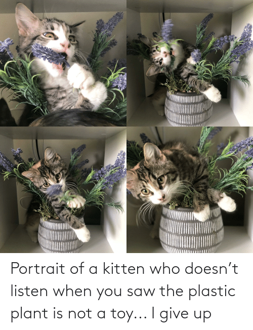 plant: Portrait of a kitten who doesn't listen when you saw the plastic plant is not a toy... I give up