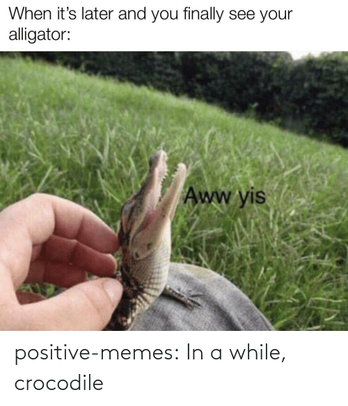 While: positive-memes:  In a while, crocodile