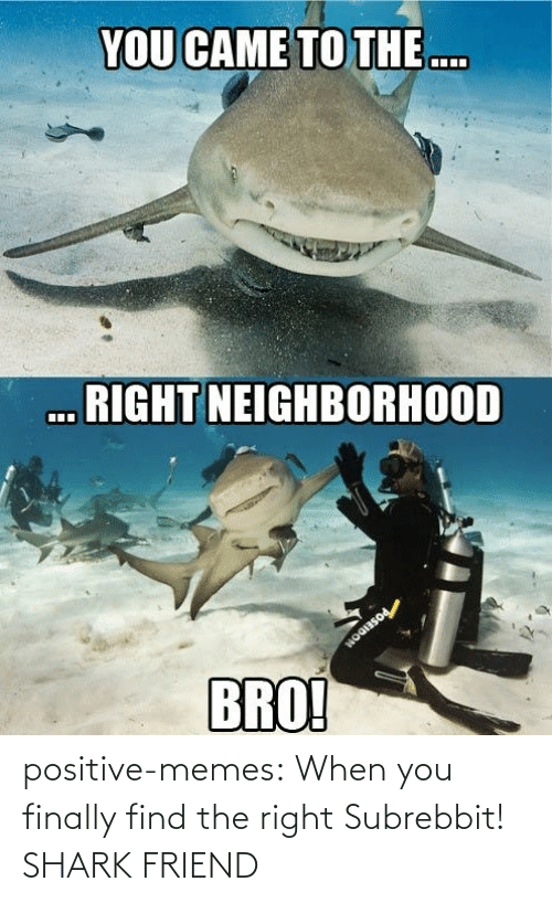 finally: positive-memes:  When you finally find the right Subrebbit!  SHARK FRIEND