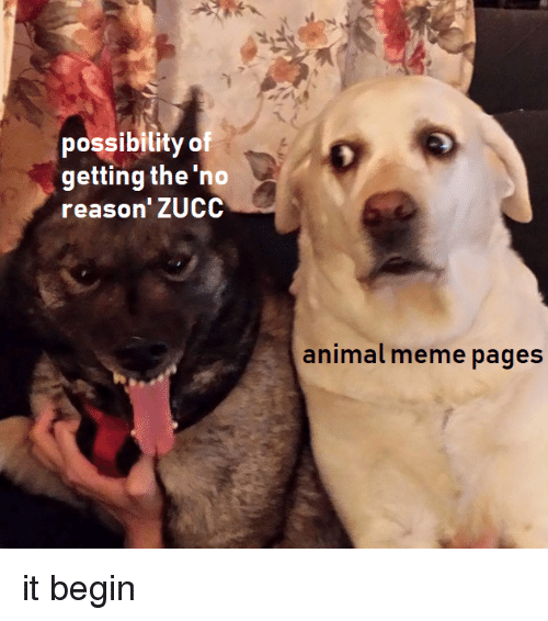 Meme, Animal, and Dank Memes: possibilityof  getting the 'no  reason'ZUCC  animal meme pages it begin