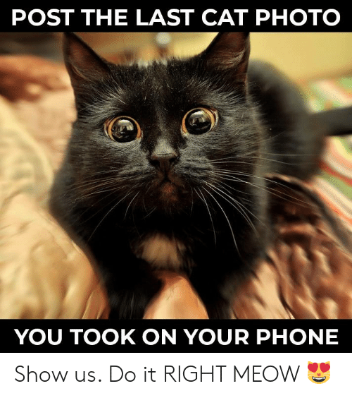 Memes, Phone, and 🤖: POST THE LAST CAT PHOTO  YOU TOOK ON YOUR PHONE Show us. Do it RIGHT MEOW 😻