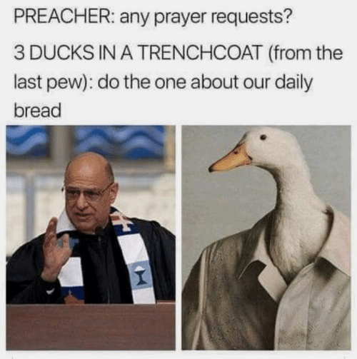 Ducks, Prayer, and Preacher: PREACHER: any prayer requests?  3 DUCKS IN A TRENCHCOAT (from the  last pew): do the one about our daily  bread